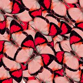 Compilation Of Yellow Orange Tip Butterflies In A Great Red Background Texture