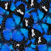 Pile Up Of Many Beautifulblue Butterflies In Full Framing Background Texture