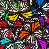 Various Of Colorful White Tiger Butterflies In Beautiful Background Texture
