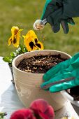 Hands Planting Seeds Into Flower Pot