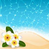 Vector illustration - Plumeria flowers on the beach