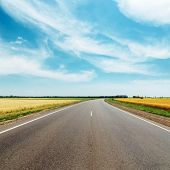 asphalt road to horizon between golden fields under blue sky with clouds