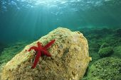 Underwater Reef in Mediterranean Sea with red Starfish