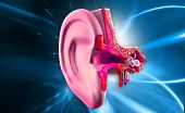 picture of eardrum  - digital illustration of Ear anatomy in colour background - JPG