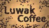 Luwak Coffee Coffee Bean on Old Paper
