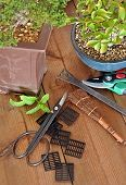 pic of bonsai tree  - bonsai with tools to cut tree transplanting and maintain in good condition - JPG