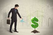 pic of pores  - Business man poring water on dollar tree sign concept on city background - JPG