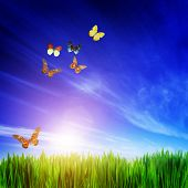 High resolution image of fresh green grass, flying butterfly group and blue sky. Spring, summer concepts, colorful real butterflies. Square composition good to crop if needed.