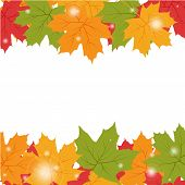 Vector illustration of Autumn background with maple leaves