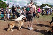 Honolulu Pet Walk 2014, People And Dogs Explore Booth At Ala Moana Beach Park