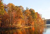 Colorful Lakeside Treeline