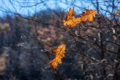 Two Autumn Leaves on a Sunny Day