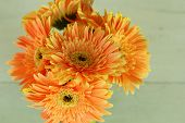 Gerbera Flowers In The Jar