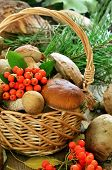 Fresh Mushrooms In Basket