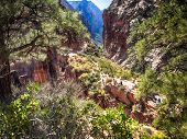 Zion National Park From The Track To Angels Landing, Utah