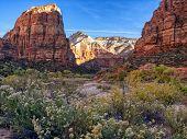 Zion National Park Angels Landing, Utah