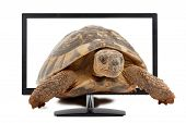 Turtle And Monitor