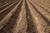 Soil Grooves Farm Lands.