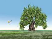 Single tree and butterfly
