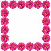 Zinnias Flower Frame Isolated On White Background