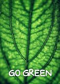 Green leaf background with text space, go green, vintage style photo of natural texture, safe environment concept