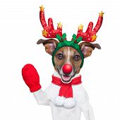 picture of christmas dog  - reindeer dog with a red nose and waving hand isolated on white background - JPG