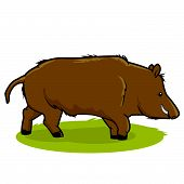 pic of wild hog  - Illustration of a wild boar on white background - JPG