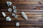Winter still life of silver pinecones