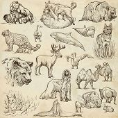 Animals Around The World (set No.10) - Hand Drawn Illustrations