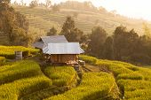 Hut in green terraced rice field during sunset at Ban Pa Bong Peay in Chiangmai, Thailand