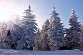 Christmas sunny morning on a mountain ski resort. Houses for tourists in the pine forest covered with snow