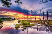 foto of florida-orange  - Beautiful colorful sunrise over calm waters in the Florida panhandle with barren trees in the foreground courtesy of prior hurricane damage - JPG