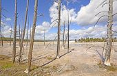 foto of petrified  - Petrified Trees Frame the Lower Geyser Basin in Yellowstone National Park in Wyoming - JPG