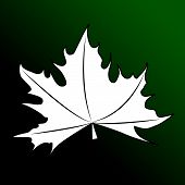 picture of canada maple leaf  - The maple leaves on a white background - JPG