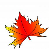 picture of canada maple leaf  - Maple leaf on a white background - JPG
