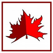 pic of canada maple leaf  - Maple leaf on a white background - JPG