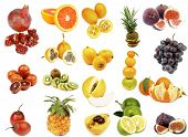 stock photo of loquat  - Tropical Fruits Collection with Pomegranate Blood Oranges Tamarillo Fruits Grenadillas Kiwi Pineapple Oranges Loquat Medlar Fruit Cantaloupe Melon Lemon Lime Figs Red Grape and Tangerines isolated on white background - JPG