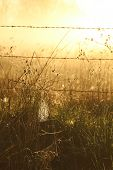 image of spiderwebs  - The sun lit up this field of dew covered spiderwebs - JPG