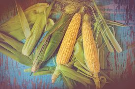stock photo of sweet-corn  - Freshly picked ear of maize sweet corn cob on rustic blue wood background retro toned image  - JPG