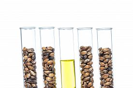 stock photo of modifier  - Wheat genetically modified Plant Cell science gm food - JPG
