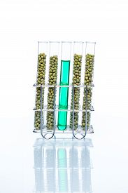 foto of modifier  - Mung Bean genetically modified green Plant Cell biotechnology - JPG