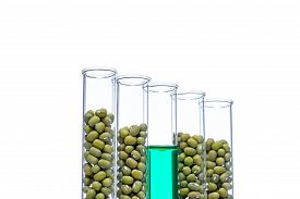 stock photo of modifier  - Mung Bean genetically modified Plant Cell biotechnology - JPG