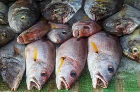 stock photo of red snapper  - Fresh red snapper on ice in the market - JPG