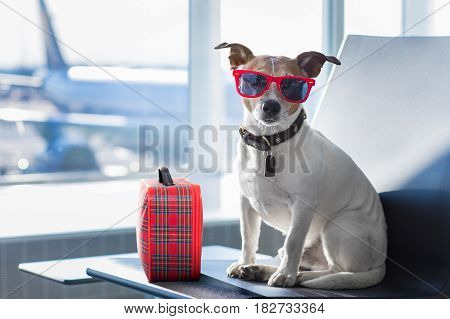 Dog In Airport Terminal On