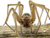 Macro Of A Spider (lycosidae Licosas) On A Branch