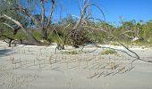Driftwood, Deadwood And Mangrove Shoots On White Sandy Frazer Island Beach.