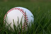 Baseball Sitting in Green Grass
