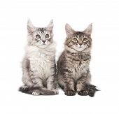 Two Fluffy Kittens poster