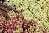 Grapes_Red_Green_Diagonal