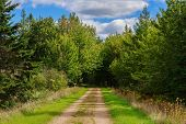 Hiking trail in rural Prince Edward Island, Canada know as the Confederation Trail or the Trans Cana poster